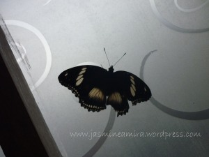 seekor kupu-kupu yang sayapnya terkoyak