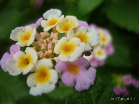 lebih dekat dengan bunga yang cantik ini